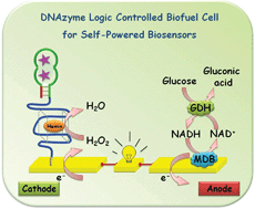 Graphical abstract: DNAzyme logic-controlled biofuel cells for self-powered biosensors